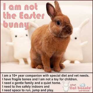 Flat-Bonnie-Easter-Bunny-Adopt-A-Plush-I-Am-Not-The-Easter-Bunny