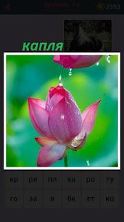 655 слов с розового бутона капает капля вниз на другой цветок 14 уровень