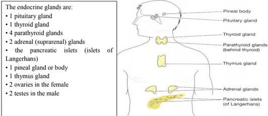 Endocrine System Note