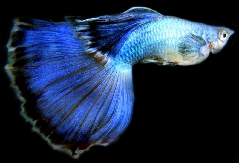 Fauna Aquascape Paling dicari
