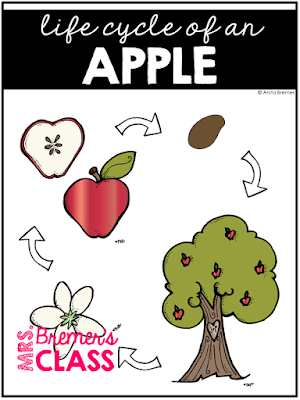 This pack contains information and activities about Johnny Appleseed and apples. It's filled with informational learning charts, graphic organizers, anchor chart headers, and student response pages. It's fun to learn about Johnny Appleseed and apples during the fall season! Students will enjoy the legend and story behind Johnny Appleseed, and will love to learn the life cycle of a fall favorite…apples! Common Core aligned. Grades 1-3 #johnnyappleseed #apples #fall #1stgrade #2ndgrade #3rdgrade