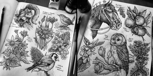 00-Animals-and-Nature-Philip-Harris-www-designstack-co