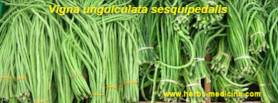 Breast Cancer use long beans