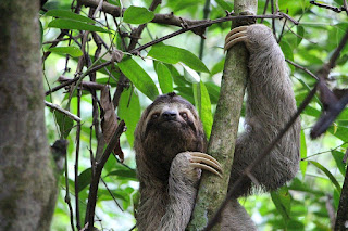 About Sloths animal in hindi