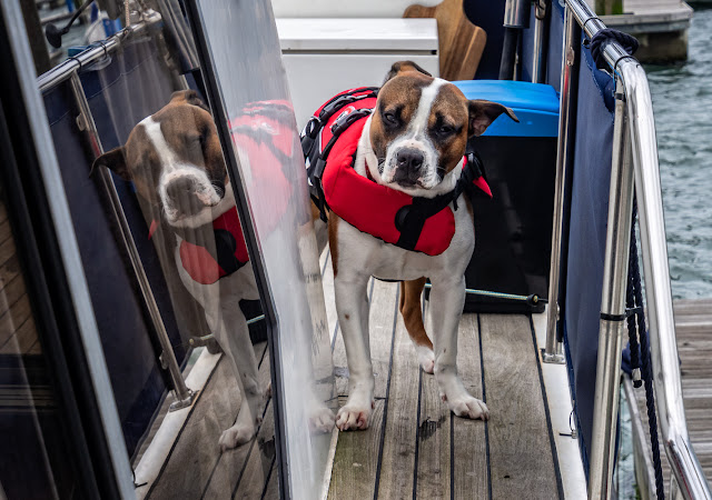 Photo of Ruby modelling her new lifejacket on Ravensdale