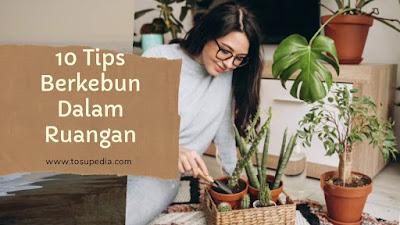 10 Tips Berkebun Dalam Ruangan