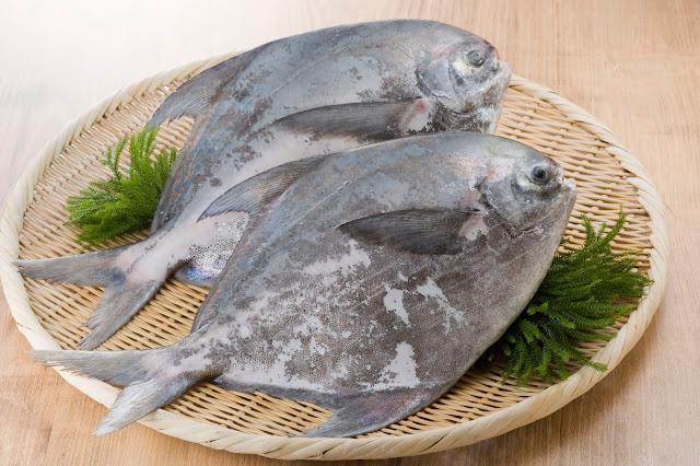 Supplier Jual Ikan Bawal Bibit & Konsumsi Serang, Banten Paling Dicari