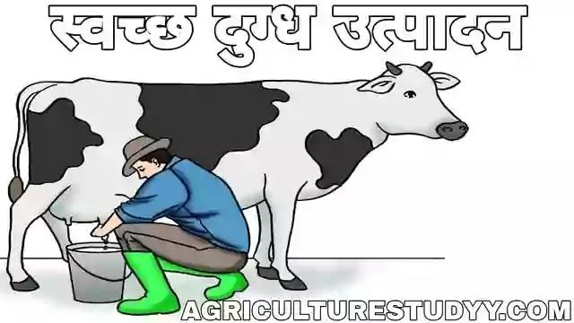 स्वच्छ दुग्ध उत्पादन क्या है, clean milk production in hindi, स्वच्छ दूध क्या है, स्वच्छ दुग्ध उत्पादन का महत्व, स्वच्छ दूध उत्पादन के सिद्धांतों का वर्णन कीजिए