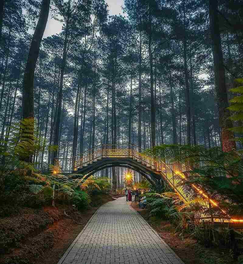 Terbaru Harga Tiket Masuk Orchid Forest Cikole Lembang