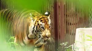 Lucknow-Zoological-Garden