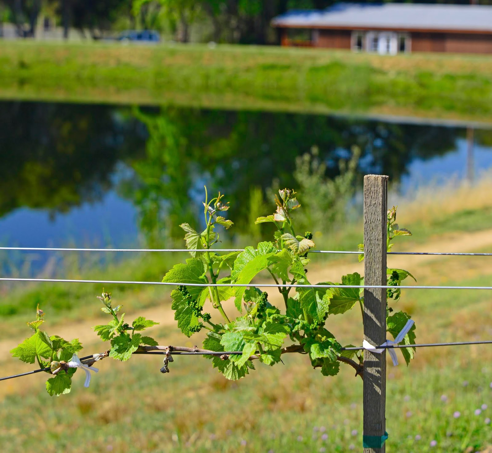 Spring in Mendocino County, California Highlights Wines, Waves, and Wilderness  via  www.productreviewmom.com