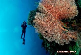 Taman Bawah Laut Wakatobi Di Desain uang kertas Rp 10.000 ( Sepuluh Ribu )