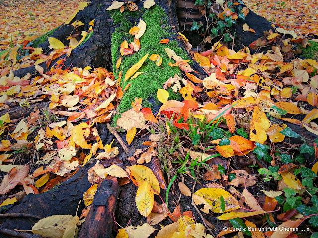 Feuilles d'automne © Lune « Sur un Petit Chemin ... »