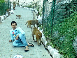 Monkeys at Vaishno Devi Route