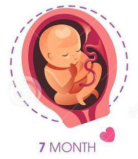 7th month baby development