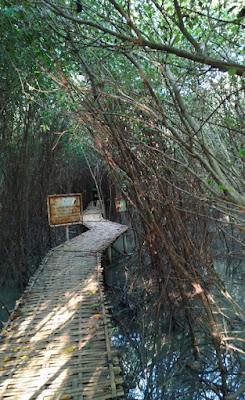 Ekowisata Mangrove Karangsong Indramayu Jabar