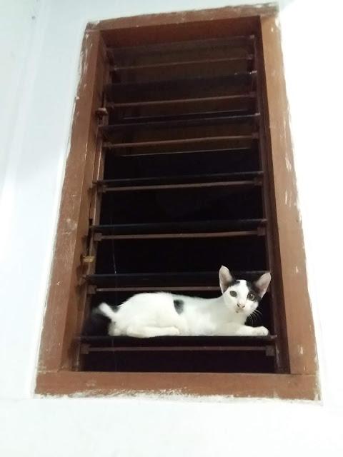 Dilema piara kucing dirumah