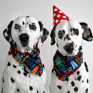 Dalmatian DIY dog birthday parties