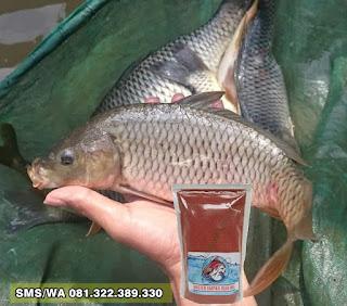 Pelet Serbuk Umpan Ikan Mas Tombro