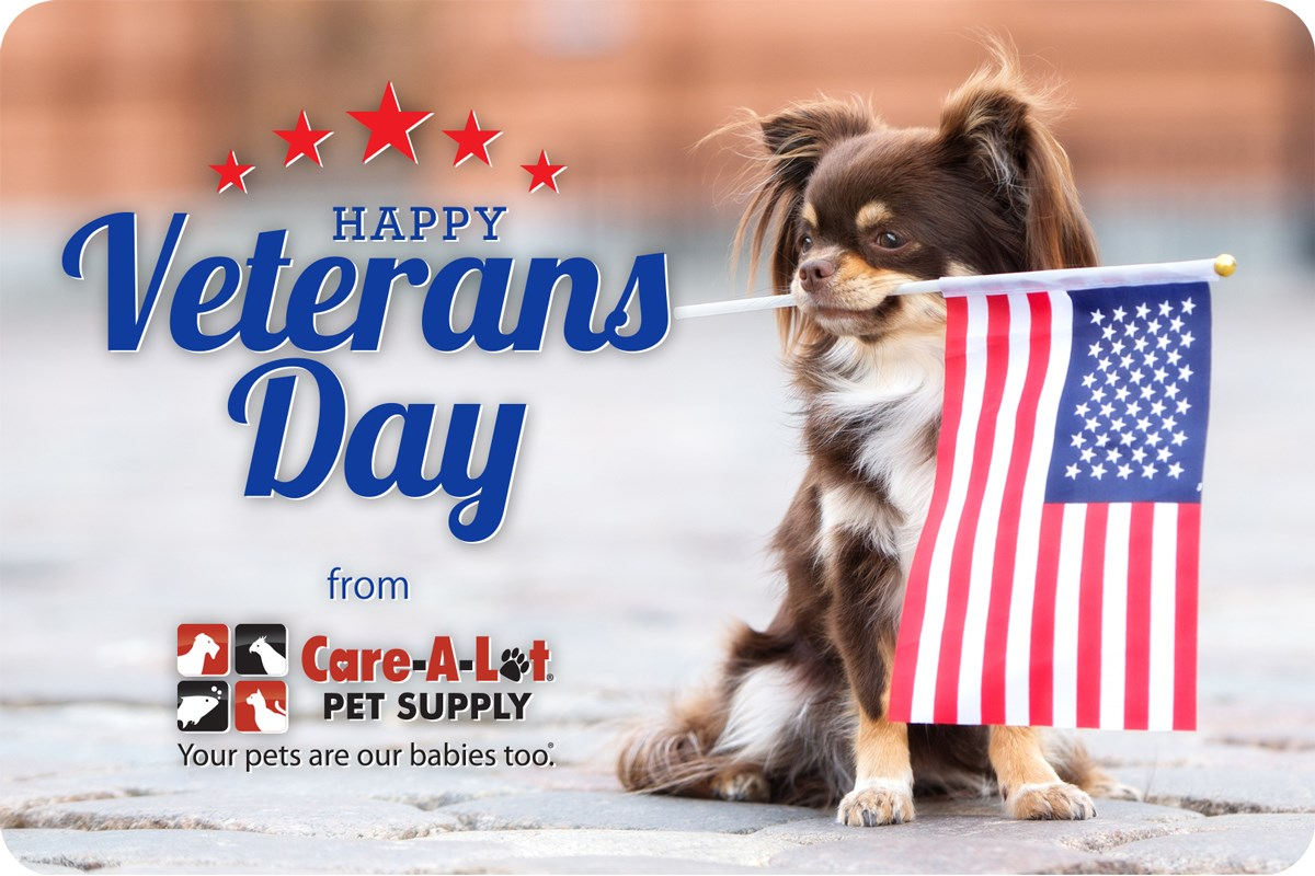 National Pets for Veterans Day Wishes Lovely Pics