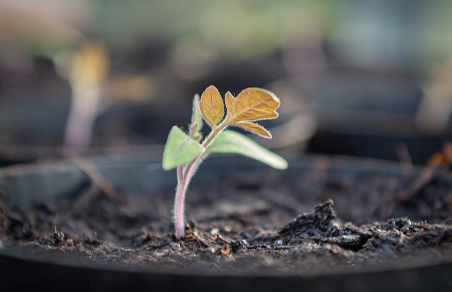 Nueva planta germinando