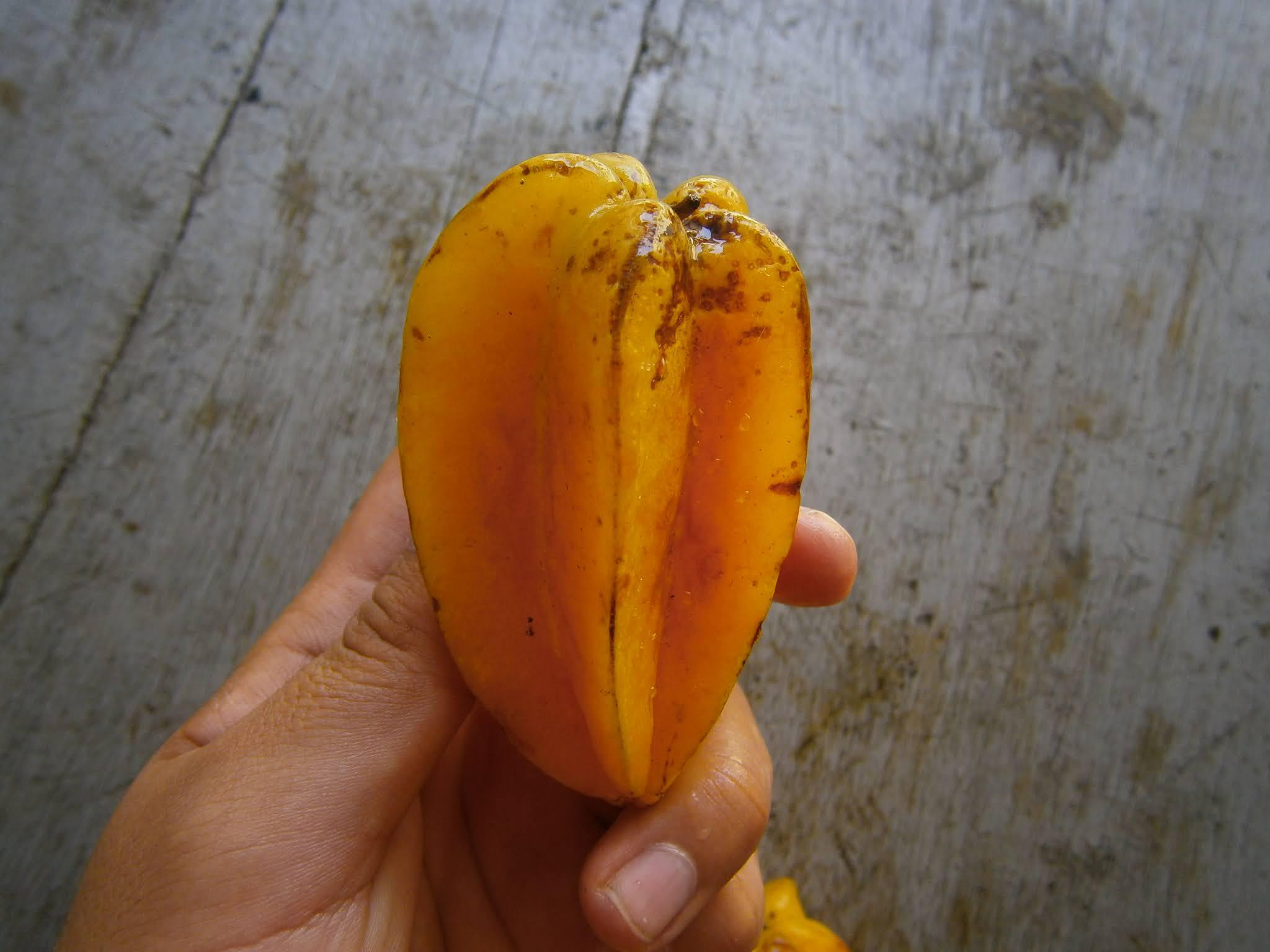 Fruta de la carambola sostenida sobre la mano