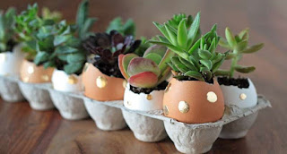 Benefits of Egg Shells for Plants - Healthy T1ps