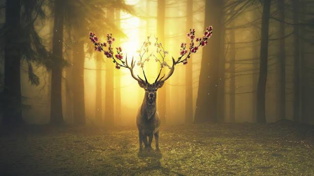 Cerf Magique dans la Forêt - Fond d'écran en Full HD