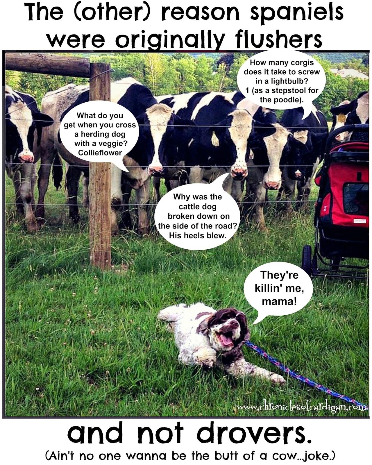 dog humor cocker spaniel corgi herding meme