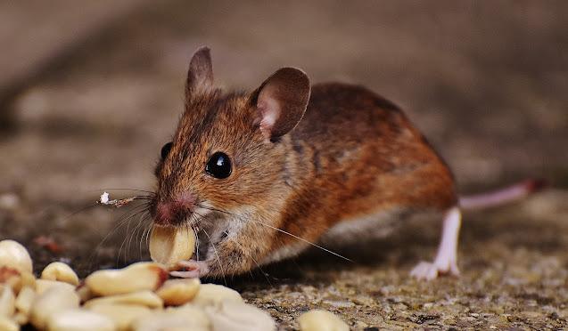 https://www.pexels.com/photo/animal-blur-close-up-cute-209112/
