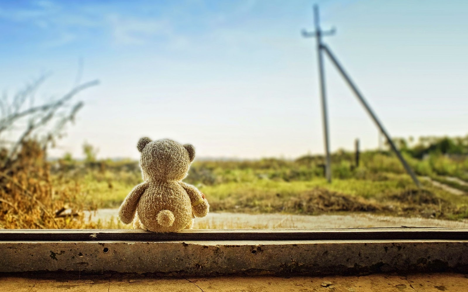 Teddy-bear-left-alone-feeling-lonely-sad-image-HD.jpg