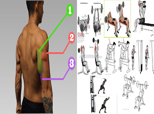 Best 8 Triceps Movements For Mass