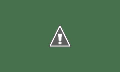 Fotografía de un plato de arroz verde con langostinos