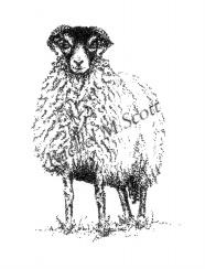Swaledale Ewe stipple illustration by Rachel M Scott