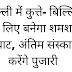 दिल्ली में कुत्ते- बिल्लियों के लिए बनेगा शमशान घाट, अंतिम संस्कार करेंगे पुजारी