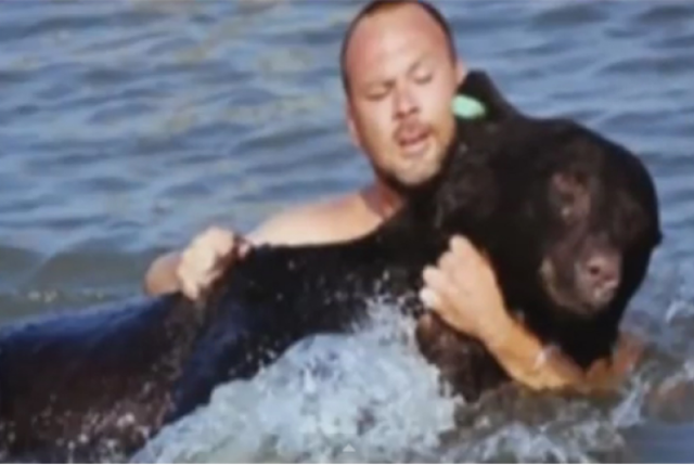 Медведь Начал Тонуть Вдали От Берега! Этот Мужчина бросился спасать его, и ему это удалось! Видео