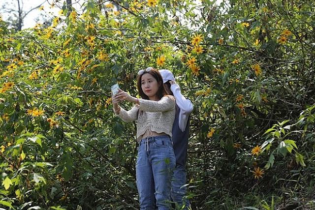 """Giới trẻ Hà Thành rủ nhau đi """"check-in"""" với hoa dã quỳ 6"""