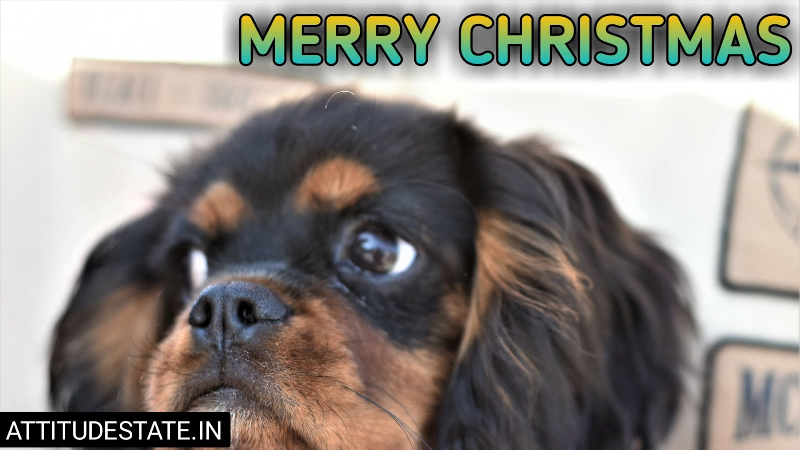 funny merry christmas cards