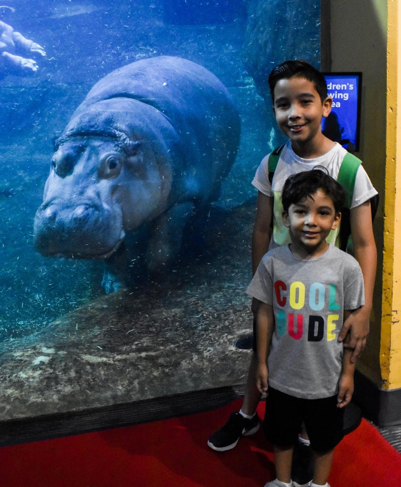 Hippo-Sized Fun at The Adventure Aquarium in NJ - LifeWithGinaG