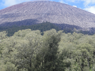 Hutan Gunung Semeru terangker