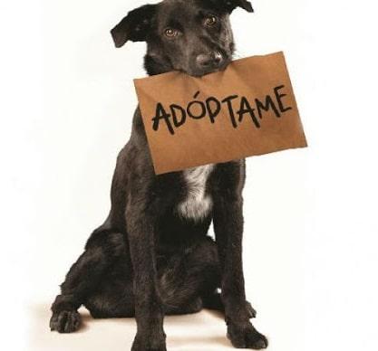 adopta un perro y salva una vida