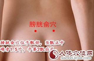 膀胱俞穴位 | 膀胱俞穴痛位置 - 穴道按摩經絡圖解 | Source:xueweitu.iiyun.com
