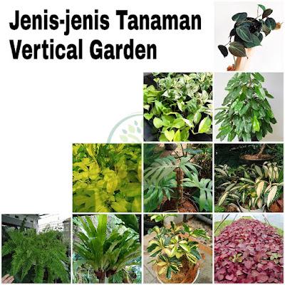 Jenis tanaman vega