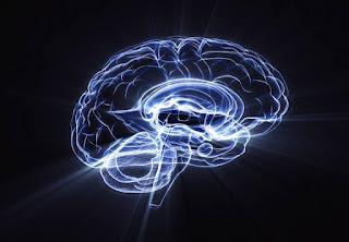 neuroscientific studies