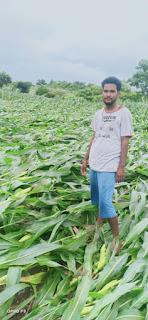 बारिस का कहर जारी, किसानों की फसल हुई तबाह