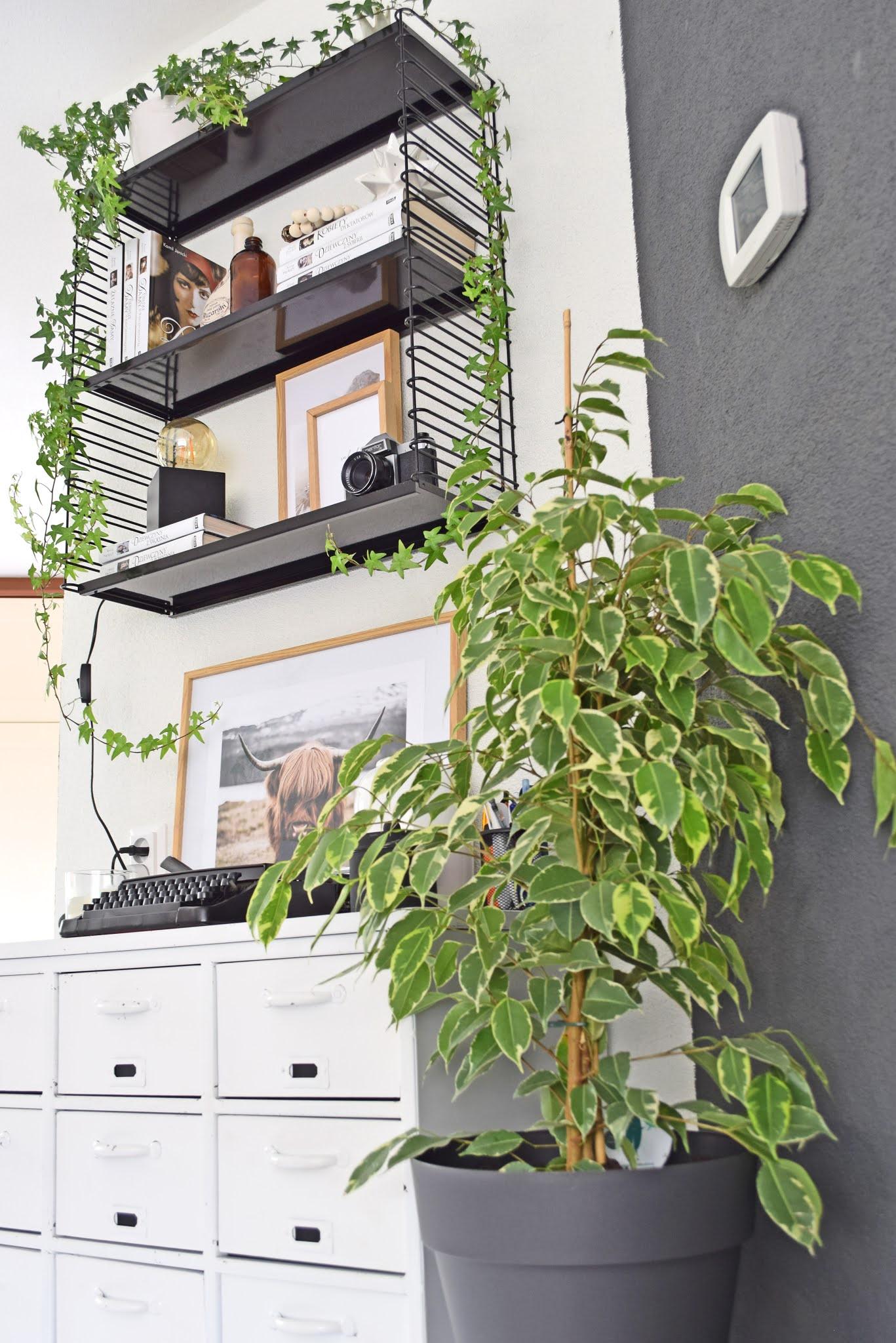 półki na ścianie w salonie