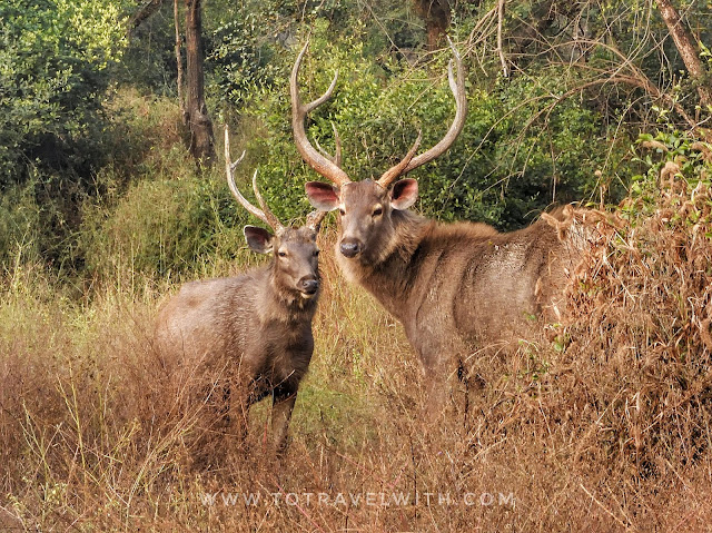sariska wildlife