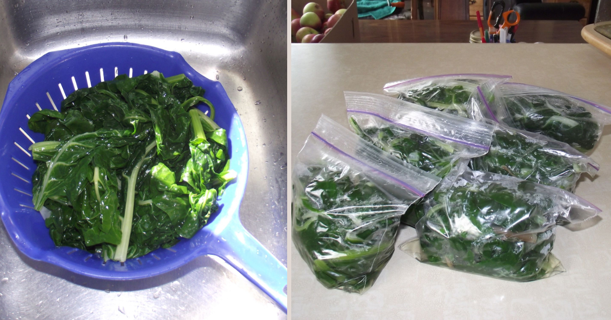 How To Blanch Swiss Chard For Freezing