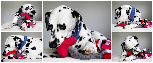 Valentine S Day Dog Toys : Dalmatian diy cupid s arrow valentine day dog toy