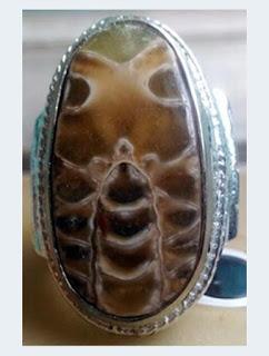 Amonit Gambar Kumbang